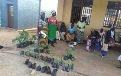 Distributie van fruitboompjes